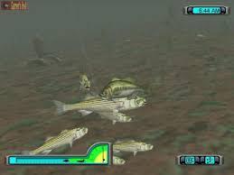 bass fish photos