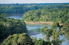 peru amazon rainforest