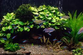 live plant aquarium