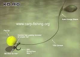 carp fishing rig
