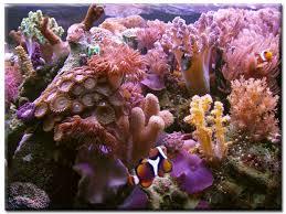 plants in the ocean