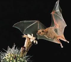 bats birds
