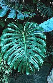 cut leaf