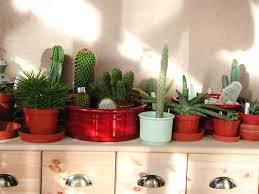cactus indoor plants