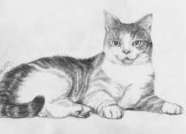 drawings cat