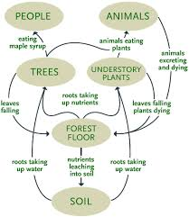 animals ecosystems