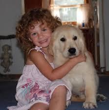 english creme golden retriever puppies