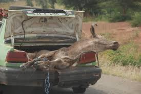 transport animal