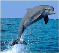 dolphin decorating