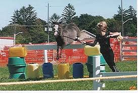 miniature horse jumping