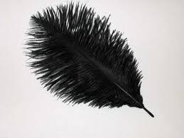 ostrich drabs
