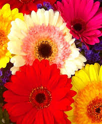 bright color flowers