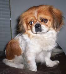 pictures of small breed dogs
