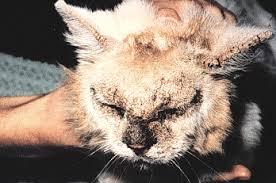 cat mites