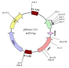 circular map