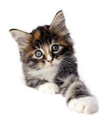 cute kitty cat pictures