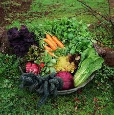 organic vegetable gardens