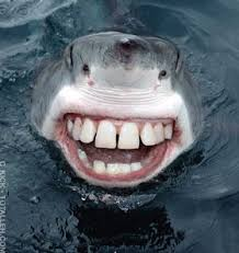 shark found