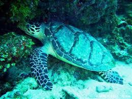coral reef animal