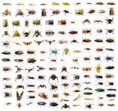 household insects