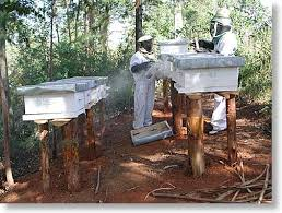 beekeeping photos