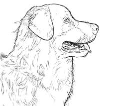 how to draw cats and dogs