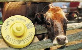 rfid livestock