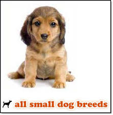 all types of dog breeds
