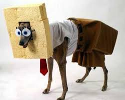 sponge dog