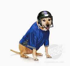 dog football helmet