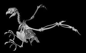 eagle skeleton