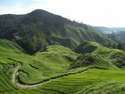 cameron islands malaysia