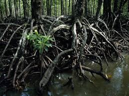 aquatic trees