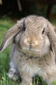 dwarf rabbit supplies
