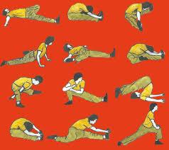 flexibilidad muscular