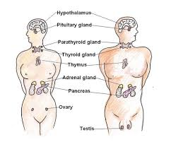 hormonal effects
