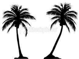 free palm trees