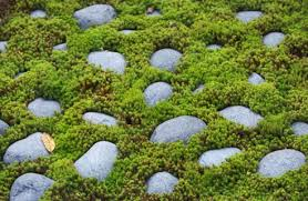 pebbles garden