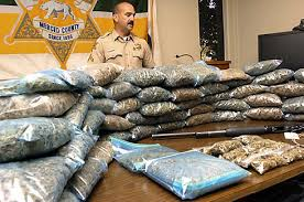 100 pounds of weed