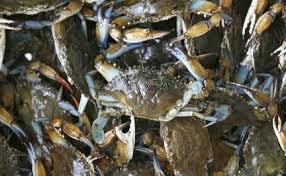 crab oil