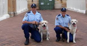 bomb detection dogs