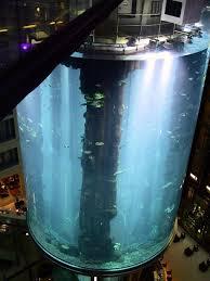 largest fish tank