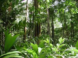 south american tropical rainforests
