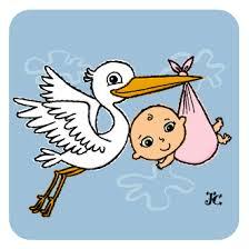 baby storks