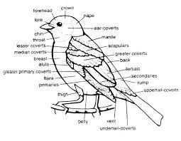 bird identification pictures