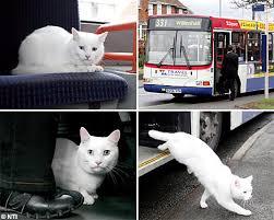 cat trolley