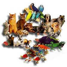 all animal pictures