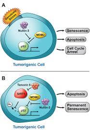p53 signaling pathway