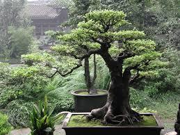 amazing bonsai