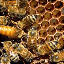 honey beehives